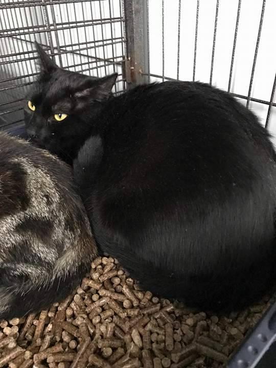 EXTRÊME URGENCE fourrière le 04 avril pour 4 chats 17619310