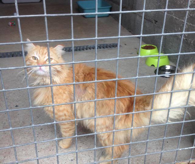 EXTRÊME URGENCE fourrière le 25 avril pour un chat 17974510