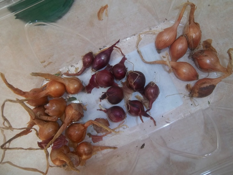 New England April 2017 01310