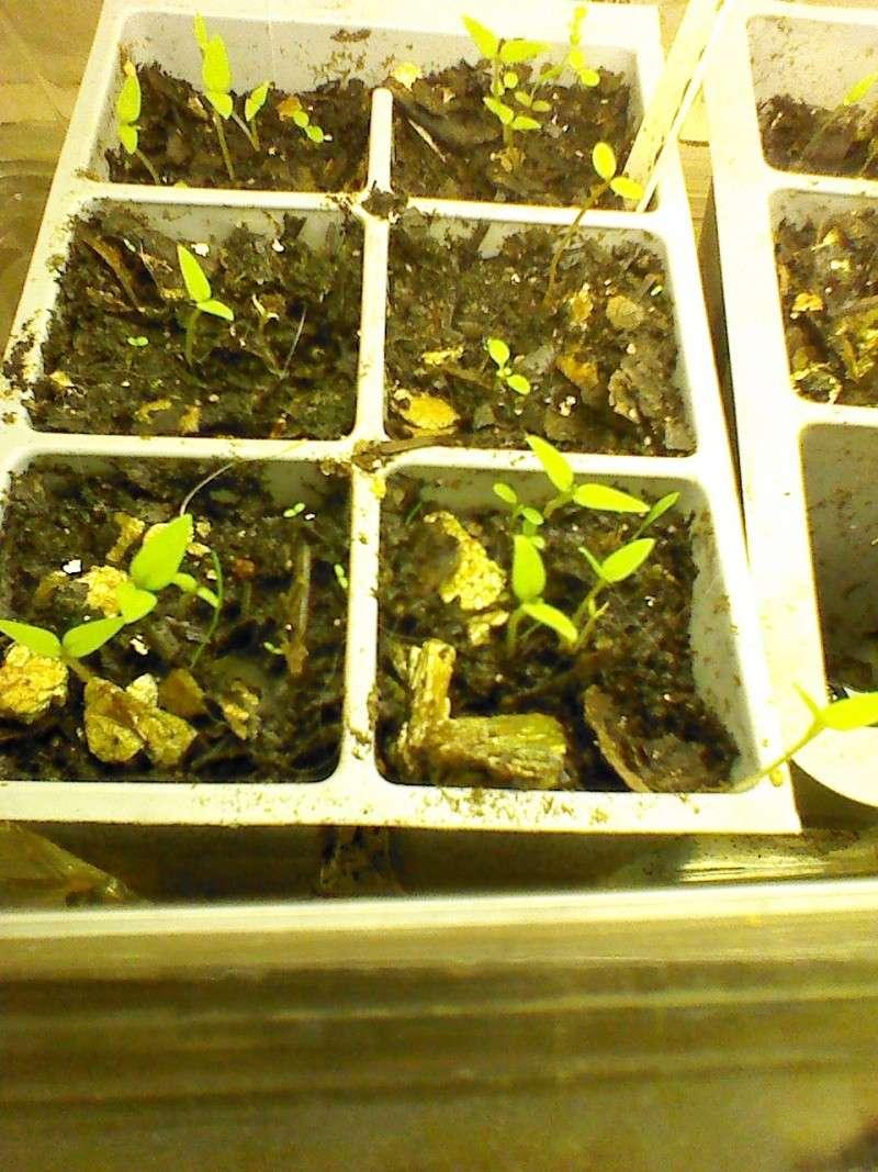 Ground Cherries Img_2056