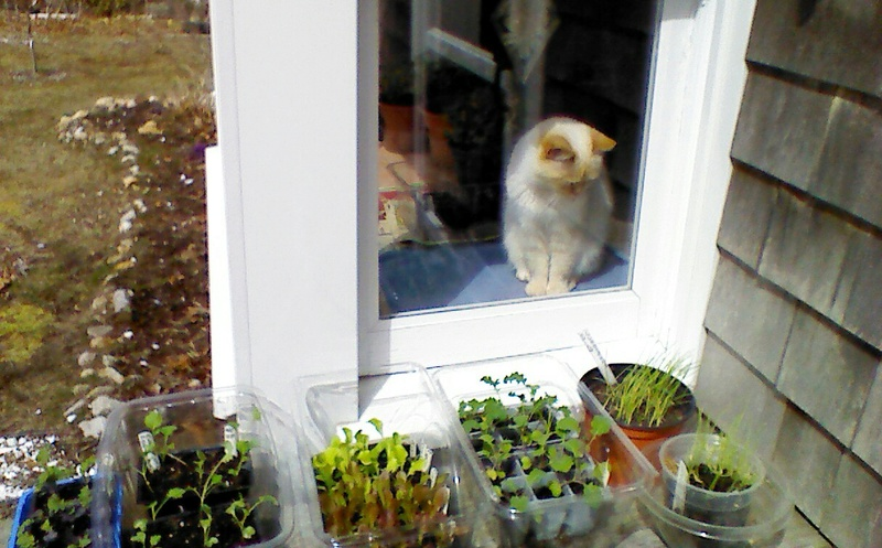 New England April 2017 Img_2100
