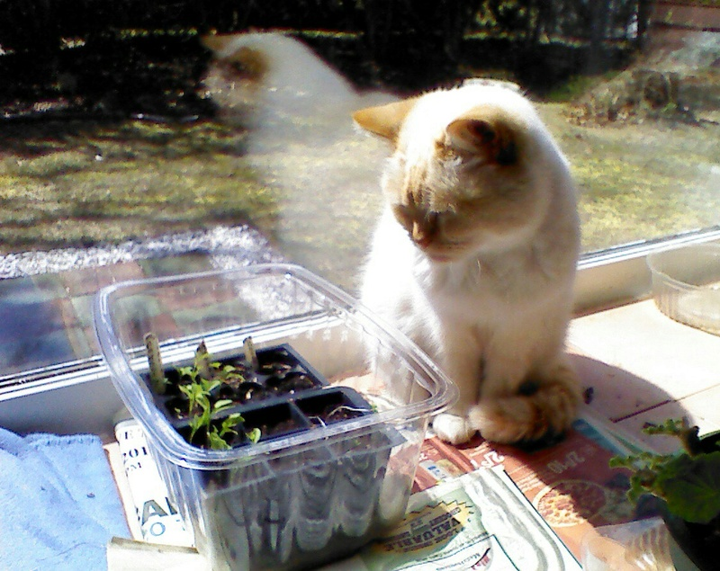 New England April 2017 Img_2101