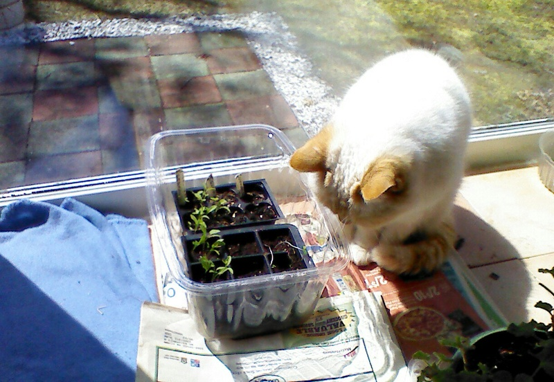 New England April 2017 Img_2102