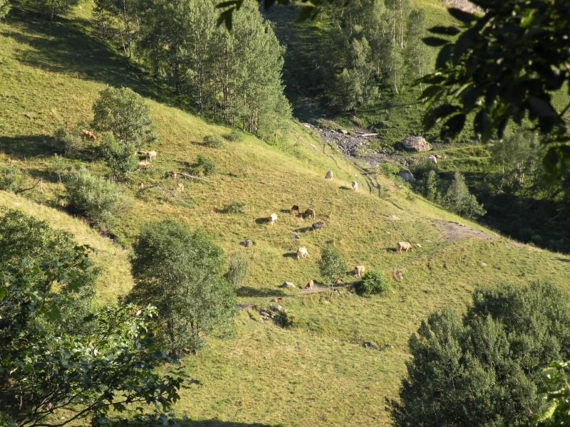 Sites et Paysages A la rencontre du Soleil (Isère) 05810