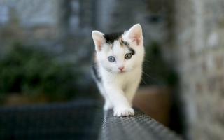 Serenity's Riverclan kitties  Cooty10
