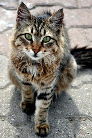 Serenity's Riverclan kitties  Kittyc10