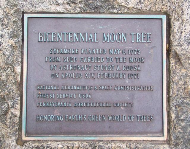 Les ''Moon Trees'' / Les arbres de la Lune Philad10