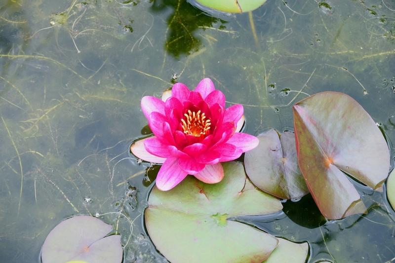 ces quelques fleurs de nos jardins - Page 2 Dsc_0412