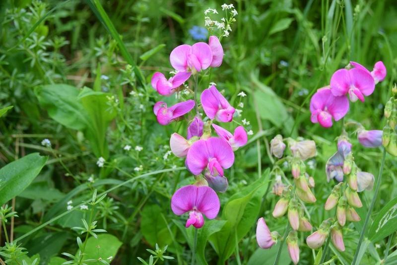 ces quelques fleurs de nos jardins - Page 2 Dsc_0413
