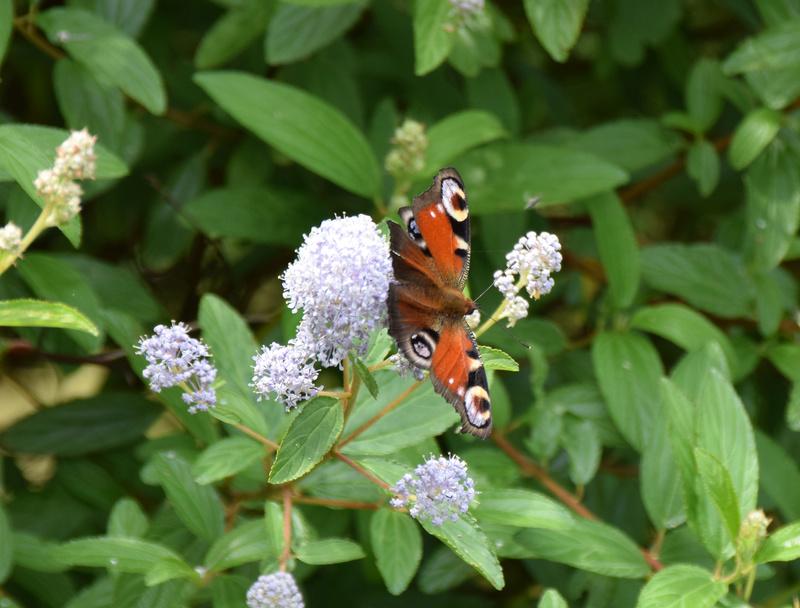 fil(et) à papillons - Page 12 Dsc_0415