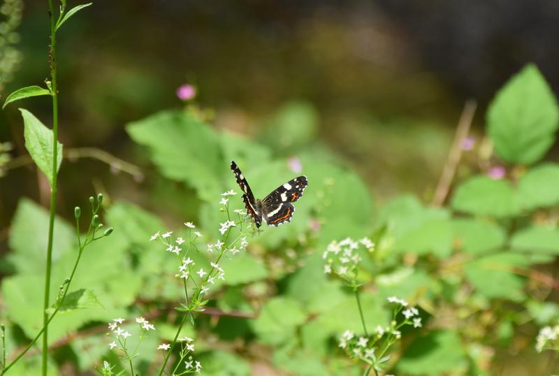 fil(et) à papillons - Page 12 Dsc_0416
