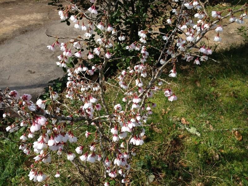 regain fleuri Img_2515