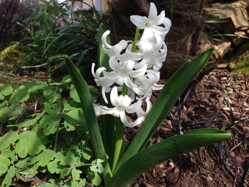 regain fleuri Img_2516