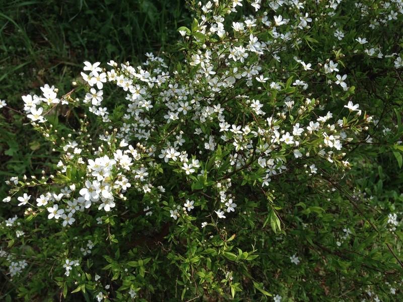regain fleuri Img_2517