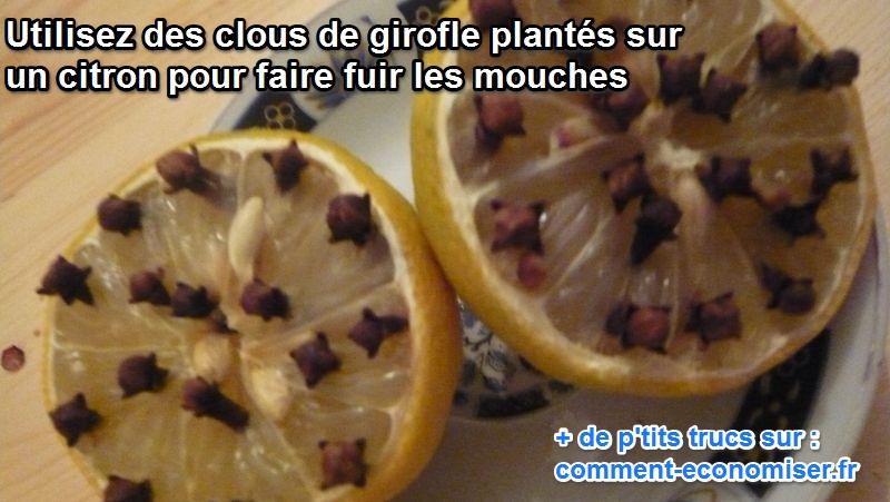 Rasso Gironde 3,4,5 juin 2017 bla bla bla - Page 27 Citron10