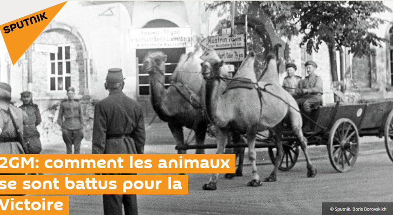 Le chameau est l'avenir du tracteur. Bandic45