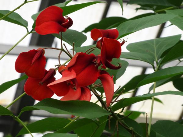 Orchideeën Hoeve - pépinière et jardin d'orchidées 01010