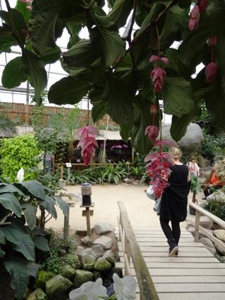 Orchideeën Hoeve - pépinière et jardin d'orchidées 012ser10