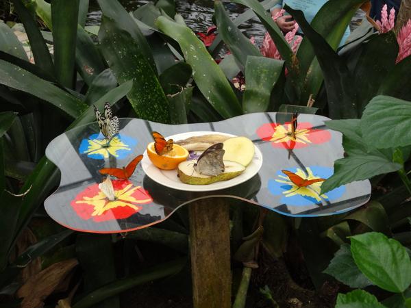 Orchideeën Hoeve - pépinière et jardin d'orchidées 01jard10
