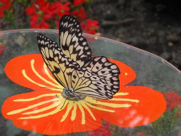 Orchideeën Hoeve - pépinière et jardin d'orchidées 05idea10