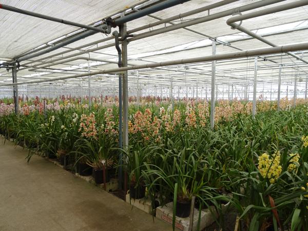 Orchideeën Hoeve - pépinière et jardin d'orchidées 0papin10