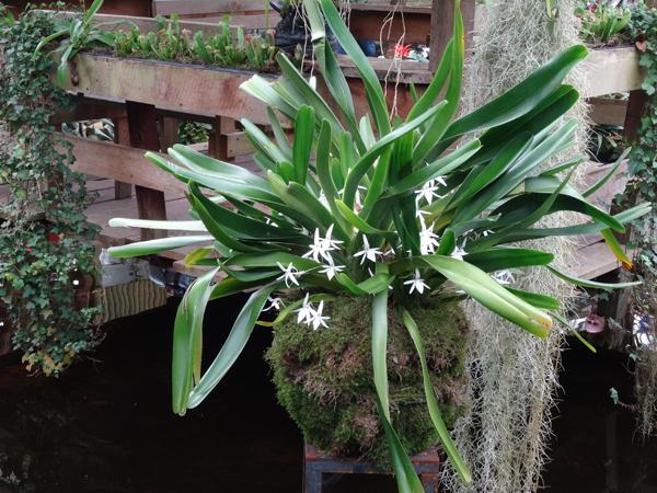 Orchideeën Hoeve - pépinière et jardin d'orchidées 10jume11