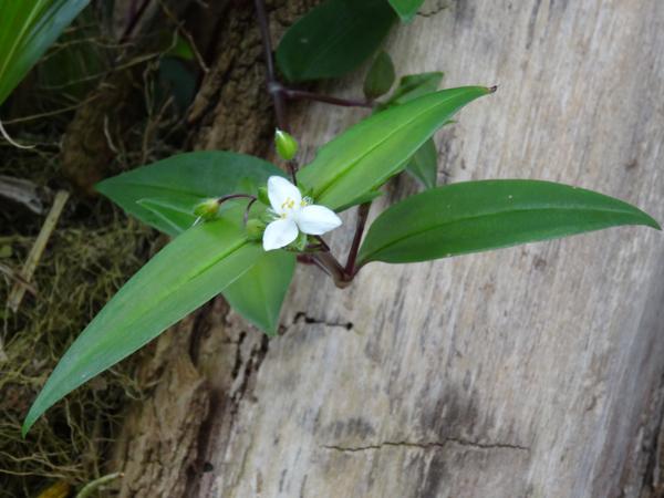 Orchideeën Hoeve - pépinière et jardin d'orchidées 11trad11