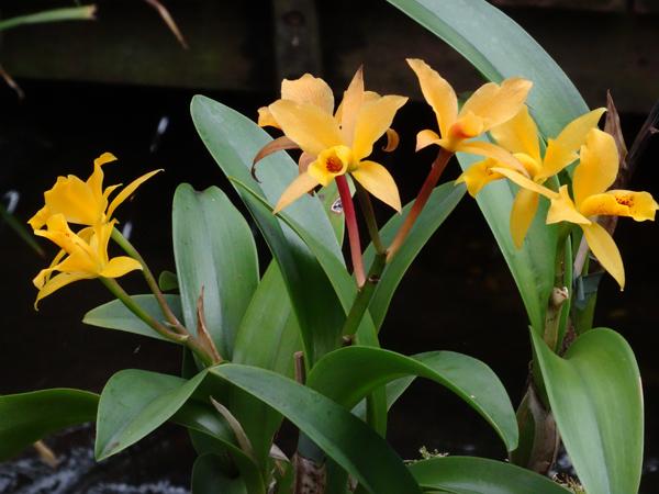 Orchideeën Hoeve - pépinière et jardin d'orchidées 12catt11