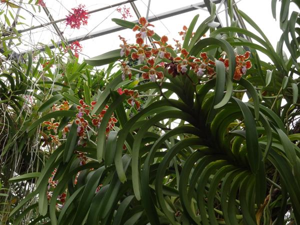 Orchideeën Hoeve - pépinière et jardin d'orchidées 15_van11