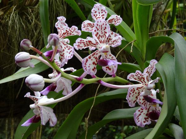 Orchideeën Hoeve - pépinière et jardin d'orchidées 16vand11