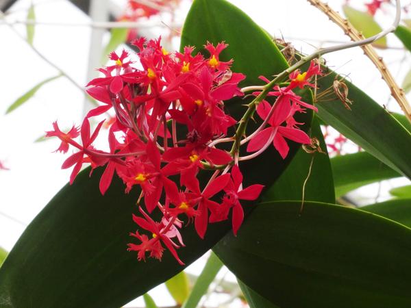 Orchideeën Hoeve - pépinière et jardin d'orchidées 17_epi11