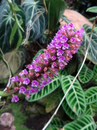 Orchideeën Hoeve - pépinière et jardin d'orchidées 1911