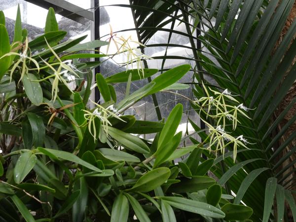 Orchideeën Hoeve - pépinière et jardin d'orchidées 1epide11
