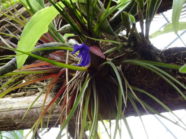 Orchideeën Hoeve - pépinière et jardin d'orchidées 20till11
