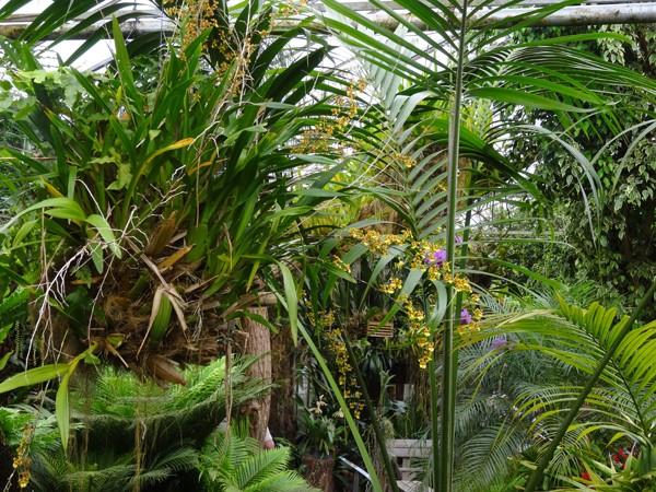 Orchideeën Hoeve - pépinière et jardin d'orchidées 2313