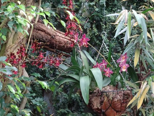 Orchideeën Hoeve - pépinière et jardin d'orchidées 2411