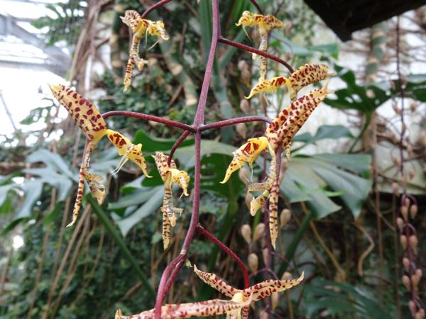 Orchideeën Hoeve - pépinière et jardin d'orchidées 25a11