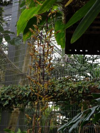 Orchideeën Hoeve - pépinière et jardin d'orchidées 25gong11