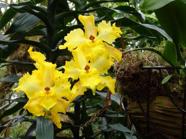 Orchideeën Hoeve - pépinière et jardin d'orchidées 3010