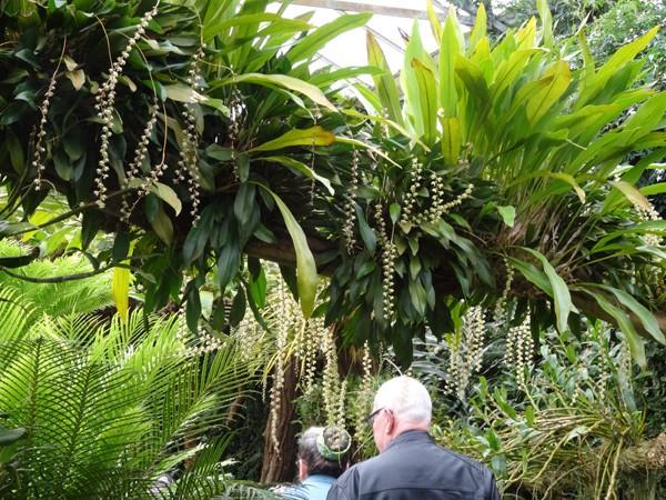 Orchideeën Hoeve - pépinière et jardin d'orchidées 3210