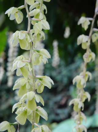 Orchideeën Hoeve - pépinière et jardin d'orchidées 33de_p10