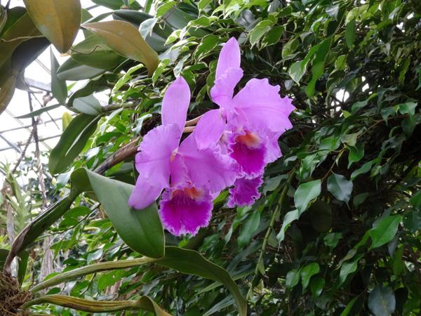 Orchideeën Hoeve - pépinière et jardin d'orchidées 3412