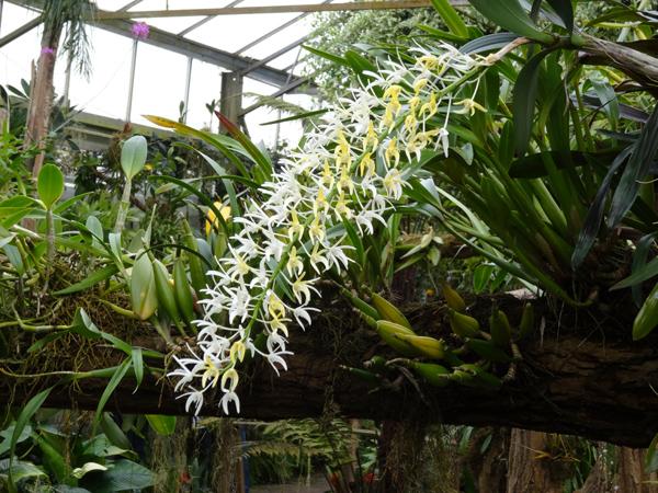 Orchideeën Hoeve - pépinière et jardin d'orchidées 3710