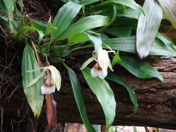 Orchideeën Hoeve - pépinière et jardin d'orchidées 3810