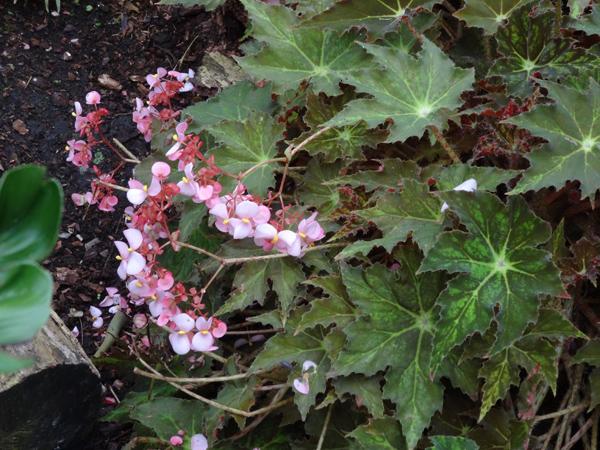 Orchideeën Hoeve - pépinière et jardin d'orchidées 40bego10