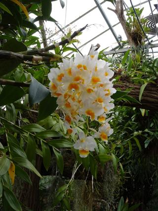 Orchideeën Hoeve - pépinière et jardin d'orchidées 4a11