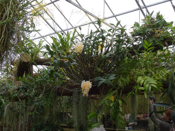 Orchideeën Hoeve - pépinière et jardin d'orchidées 4dendr11