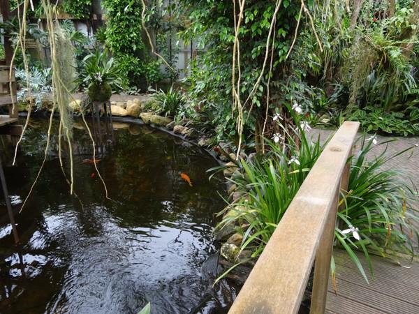 Orchideeën Hoeve - pépinière et jardin d'orchidées 9neoma11
