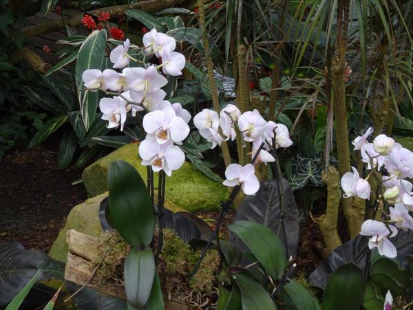 Orchideeën Hoeve - pépinière et jardin d'orchidées A1010
