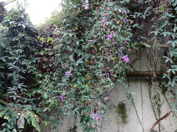 Orchideeën Hoeve - pépinière et jardin d'orchidées A1pass10